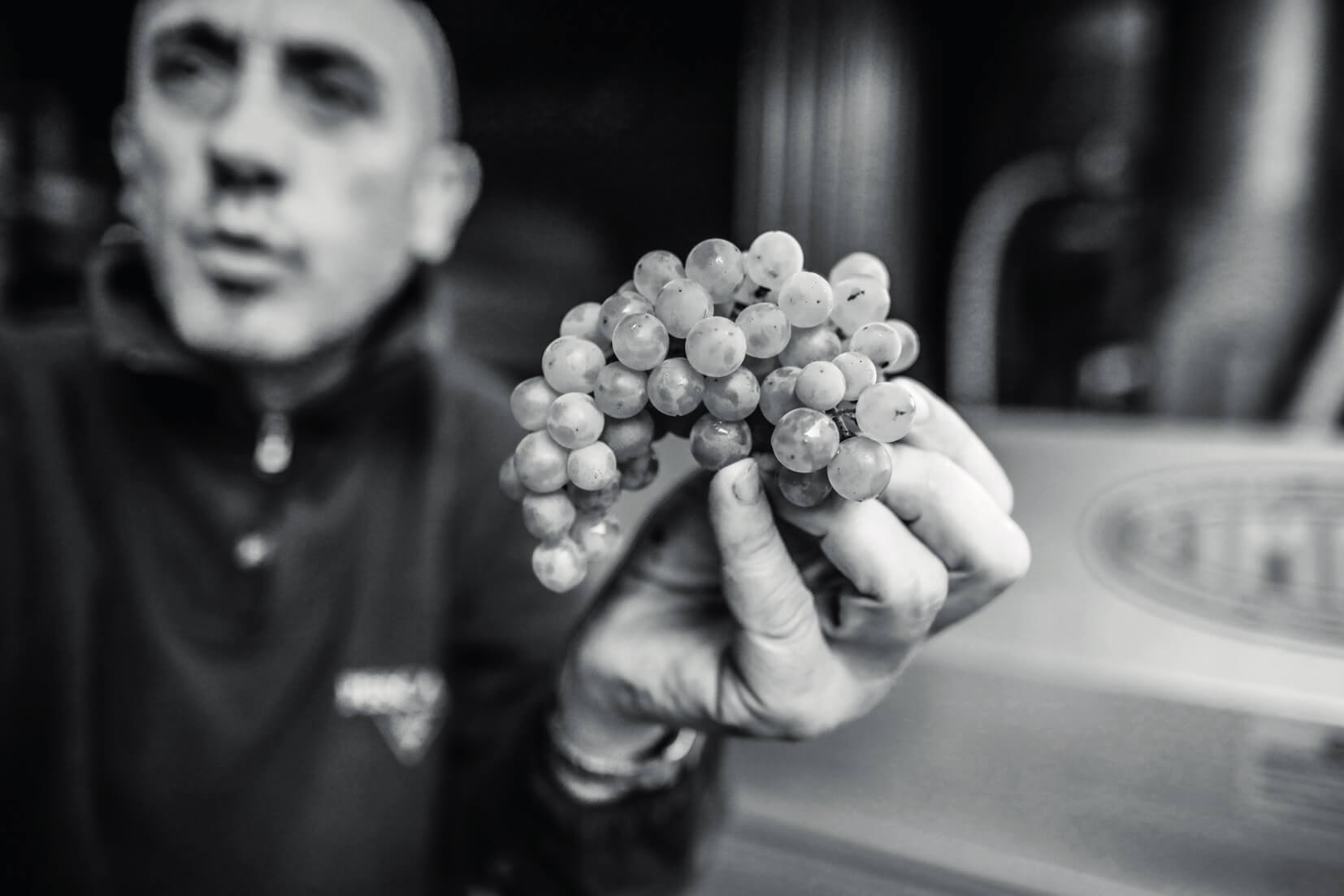 pescaja uva bianca