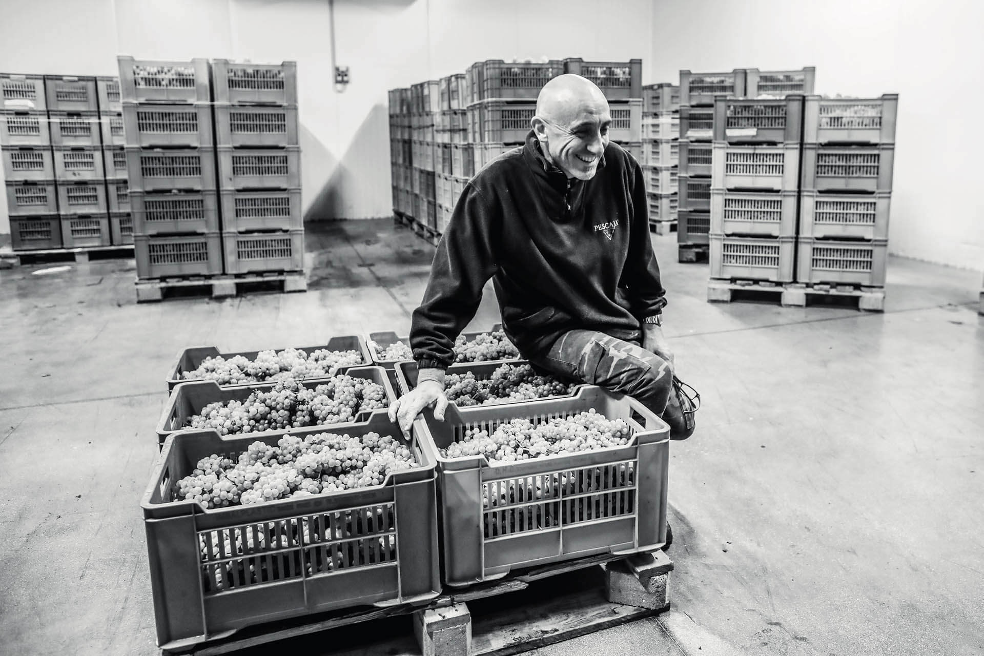 Beppe Pescaja raccolta uve in cantina