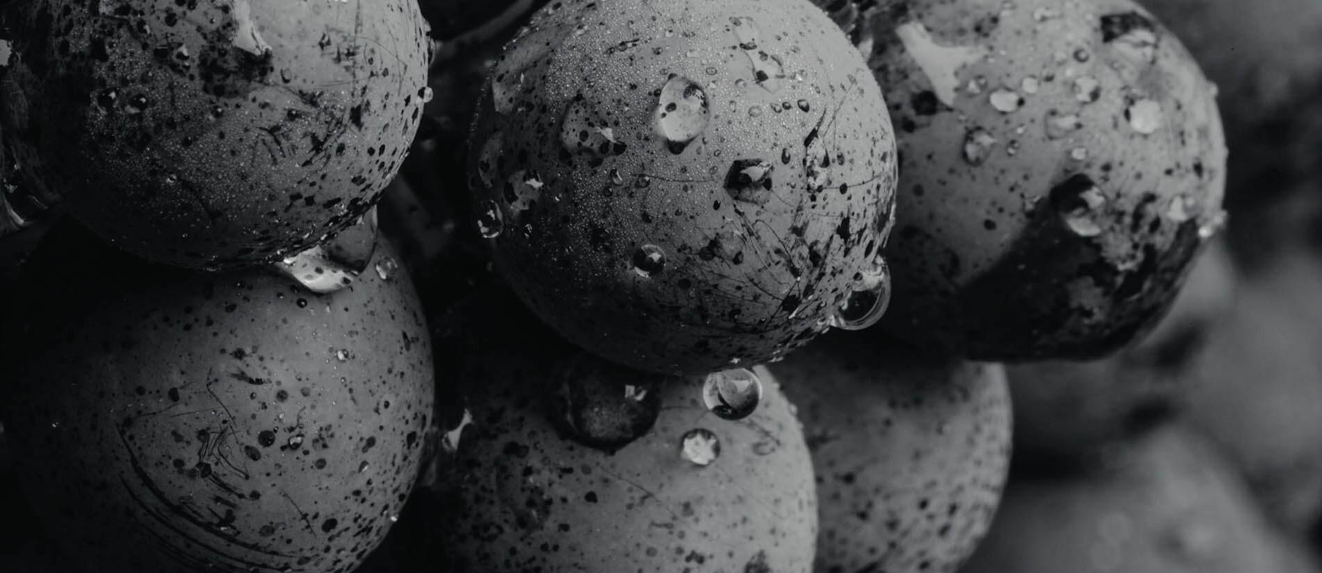 uva vini pescaja